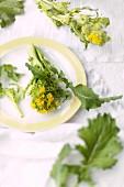 Stängelkohl (Cime di Rapa) mit Blüte auf Teller und daneben