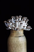 Shimeji mushrooms in a vase against a black background