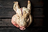 A pig's head on a dark wooden wall