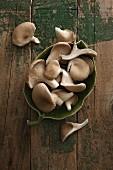 Austernpilze in Schale auf Holzuntergrund