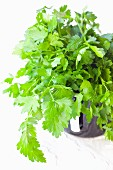 A cup of flat-leaf parsley