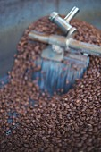 Coffee beans in a roasting drum, roasting house Elbgold in Hamburg
