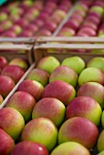Crates of freshly harvested apples
