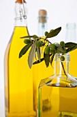 A sprig of olives in a bottle of olive oil