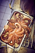 Octopus on a baking tray in a commercial kitchen