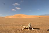 Wüsteneidechse im Sand, Afrika