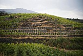 The Passopisciaro Guardiola vineyards, Sicily, Italy