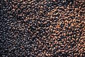 Roasted black malt