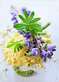 Lupine flour and lupines