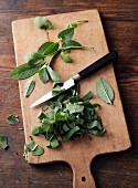 Sage leaves being chopped for pine salve à la Hildegard von Bingen