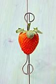 Frische Erdbeere am Spiess