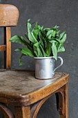 Fresh wild garlic in an aluminium on an old wooden chair