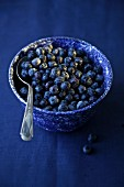 Blackberries in a blue ceramic bowl on a blue surface