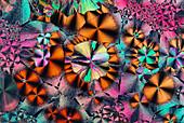 PLM of niacinamide crystals