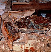 Dry rot under floorboards of a house