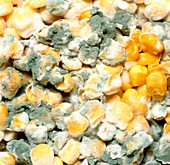 Mouldy tinned sweetcorn