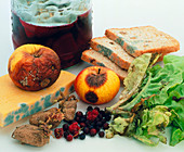 Mouldy foods,cheese,bread and fruit