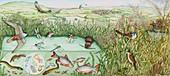 British reedbed wildlife