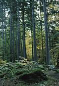 Silver Fir and Beech forest