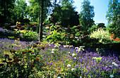 Mixed flowers in a garden