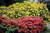 Rhododendron and Azalea bushes