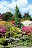 Rhododendron,Azalea and Conifers