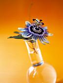 Passion flower in vase