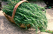 Rosemary in a basket