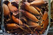 Monkey-puzzle tree seeds,Araucaria sp