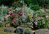 Seaside rockery garden