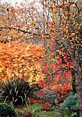 Garden in autumn