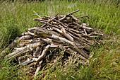 Wood pile habitat