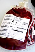 Donated blood bags