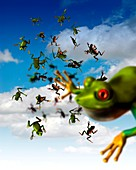 Raining frogs,artwork