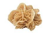 Desert rose of gypsum crystals