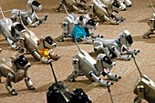 AIBO robot dogs