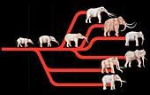 Elephant evolution,diagram