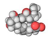 Prostaglandin F2a molecule