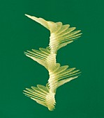 Maple seed flight path