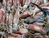 Squid on sale at a fish market