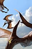 Pteranodon pterosaurs in flight