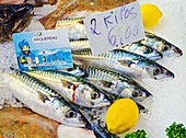 Mackerel on a fish counter