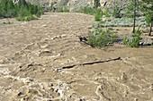 Spring flood,Nicola River,Canada