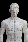 Human model showing acupuncture points