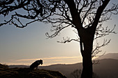 A tree and dog at sunset,England