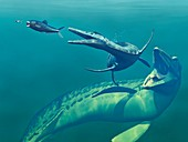 Cretaceous marine predators,artwork