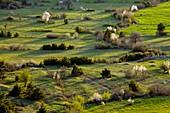 Old field patterns,Turkey