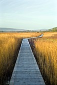 Nature reserve boardwalk