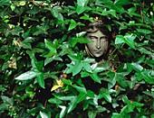Ivy hiding a statue