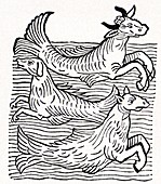 15th Century German woodcut print